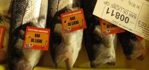 Biscay bass fishermen predict end-of-year limits