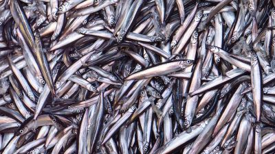 Capelin agreement reached