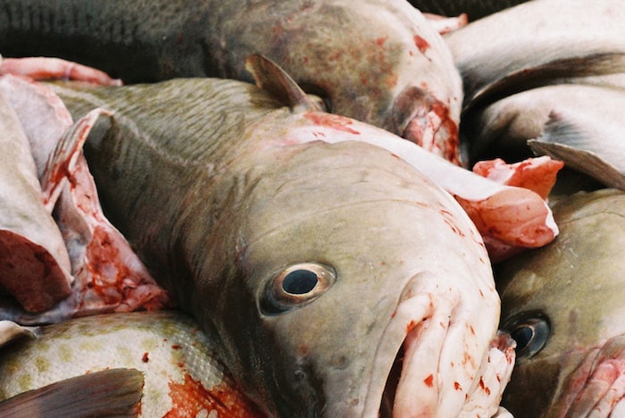 Cod and oil don't mix