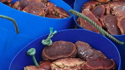 Pilots for new Scottish fisheries management arrangements