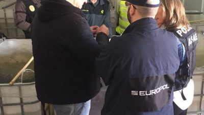 Over five tonnes of smuggled glass eels seized in Europe this year