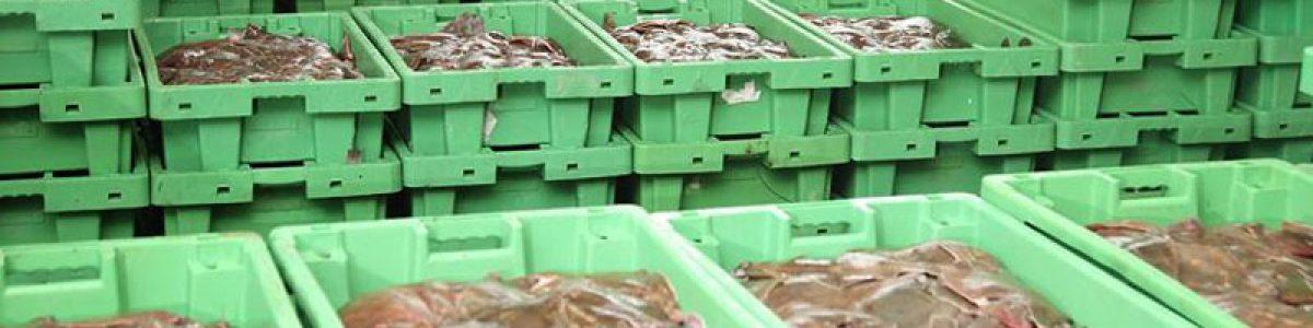 Danske Fiskeauktioner fortsætter omsætningsstigningen