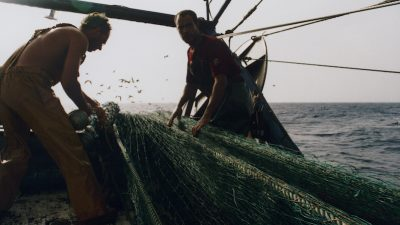 Significant progress towards sustainable EU fisheries