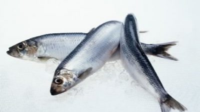 Record January Exports of Pelagic Fish