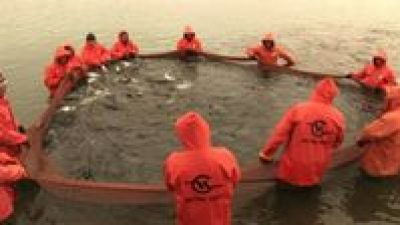 Western Kamchatka salmon achieves MSC certification