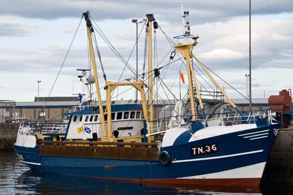 TN 36 –  Mattanja – ©FiskerForum - Foto: jimmyt