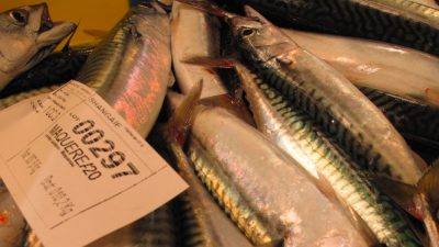 MSC says no to reinstating mackerel certificates – despite healthy stock