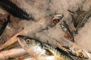 MSC certification for the North East Atlantic mackerel fishery coms to an end on 2nd of March - @ Fiskerforum
