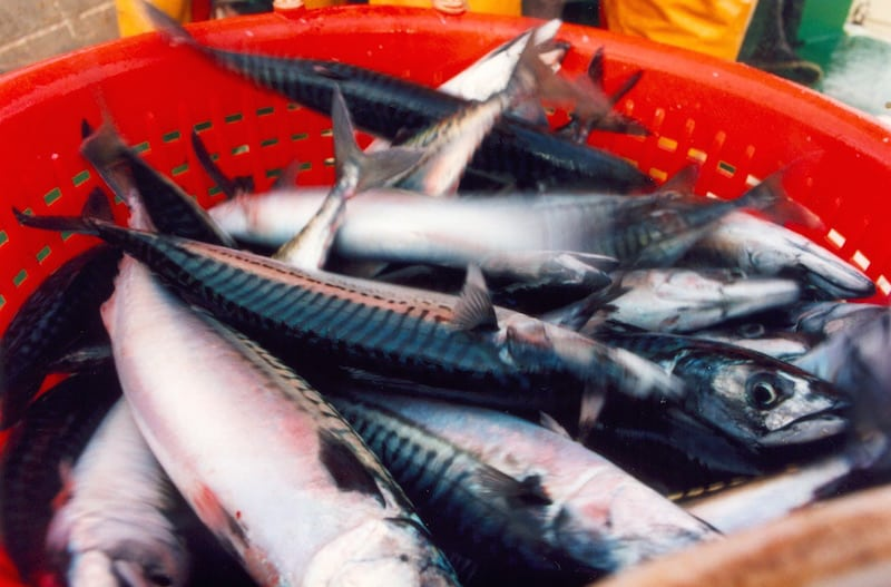 Read more about the article Iceland sets mackerel quota
