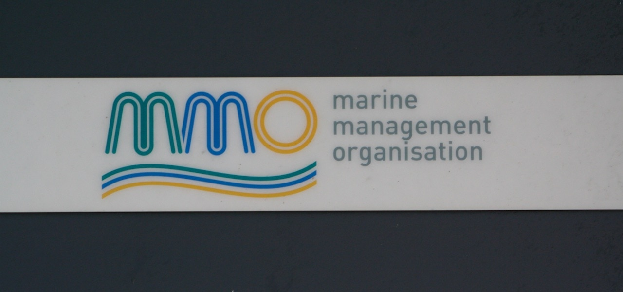 New man in charge at MMO