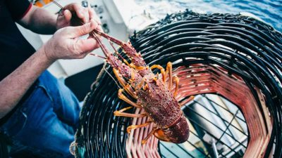 South Australia's seafood industry looks for new markets after Covid-19