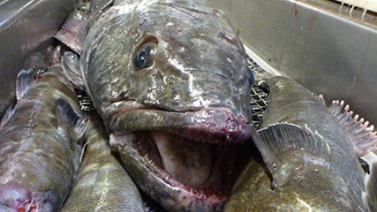 SIOFA stamps out under-regulated fishing for toothfish