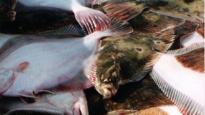 Quota boost for Baltic demersal fisheries