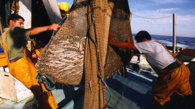 Decisive step towards improving Mediterranean fisheries management