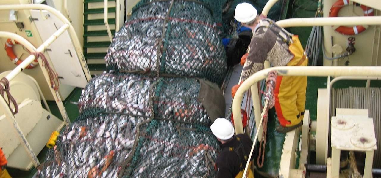 Good year for Síldarvinnslan's groundfish trawlers