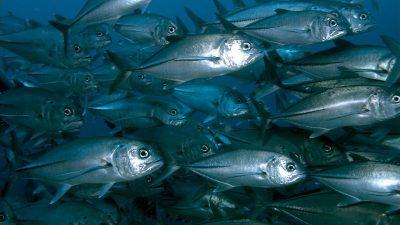 Europêche debunks Pauly overfishing claims